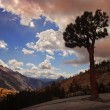 Lone Tree Yosemite — Stock Photo