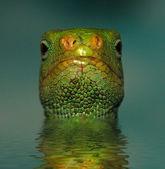 Lizard In The Water — Stock Photo