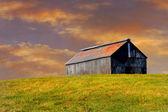 Kentucky Horse Farm — Stock Photo