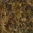 Dormant Grass background — Stock Photo #3910160