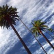 Stock Photo: Beverly Hills Palms