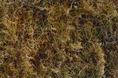Dormant Grass background — Stock Photo