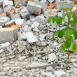 Debris and young plant — Stock Photo