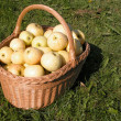 Stock Photo: Basket Full Of Apples