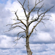 Dead tree — Stock Photo