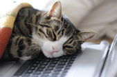 Cat power napping — Stock Photo