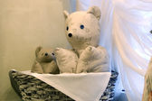 Soft bears — Stock Photo