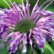 Purple flower - Foto Stock