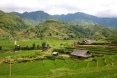 Sapa Vietnam Rice Terraces — Stock Photo
