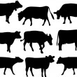 Cow - Imagen vectorial