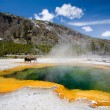 Yellowstone - Stock Photo