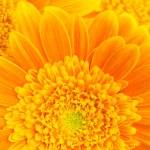 Flower background — Stock Photo #3892752