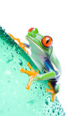 Frog on bottle isolated white — Stock Photo