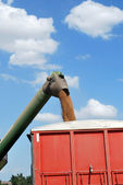 Auger unloads Kansas Wheat into Red Truck — Stock Photo
