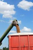 Taladro de descarga trigo de kansas en camión rojo — Foto de Stock