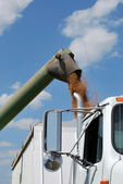 Auger Unloads Kansas Wheat — Stock Photo