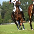Polo Competition — Stock Photo