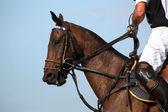 Um jogador de pólo está sentado em seu cavalo e calças justas as rédeas — Foto Stock