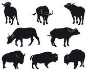 Bison and Buffalo — Stock Vector