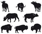 Bison and Buffalo — Stock Vector