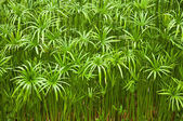 Chatuchak Park Water Plants — Stock Photo