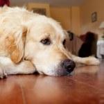 Dog — Stock Photo #3919413