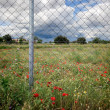 Fence and flowers — Stock Photo