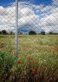 Valla y flores — Foto de Stock