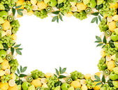 Fruit frame — Stock Photo