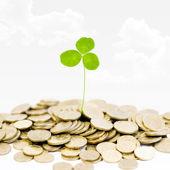 Pianta e un sacco di monete d'oro — Foto Stock