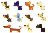 Set breeds of dog — Stock Photo