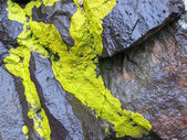 Lime green lichen — Stock Photo