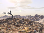 荒涼とした荒れ地 — ストック写真