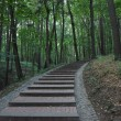Stockfoto: Ladder in wood