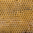 Royalty-Free Stock Photo: Bee honeycombs