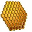 Honeycomb Hive — Stock Vector