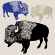 North American Bison or Buffalo — Stock Vector