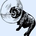 Dog returns from vet — Stock Vector