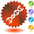 DNA Strand — Stock Vector