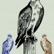 Hand Drawn Bird - Image vectorielle