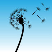 Dandelion — Vector de stock