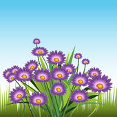 Purple Daisies — Stock Vector