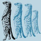 Meerkat — Stock Vector