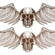 Stock Vector: Winged Skulls