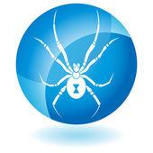 Spider — Stock Vector