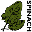 Spinach — Stock Vector #4091188