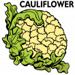 cauliflower — Stock Vector