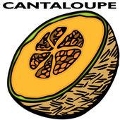 Cantaloupe — Stock Vector