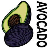 Avocado — Stock Vector