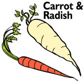 Radish Carrot Set — Stock Vector